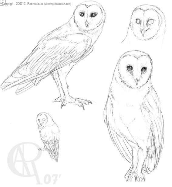 567x615 Barn Owl Line Drawing