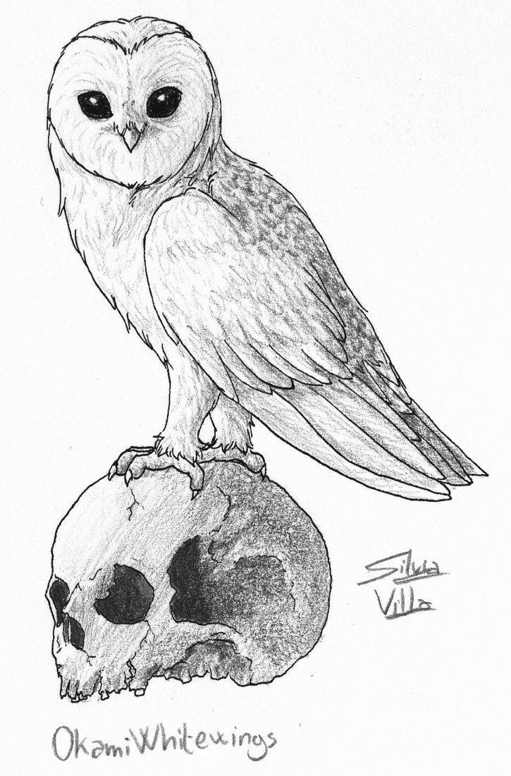 725x1101 Barn Owl With Skull By Okamiwhitewings