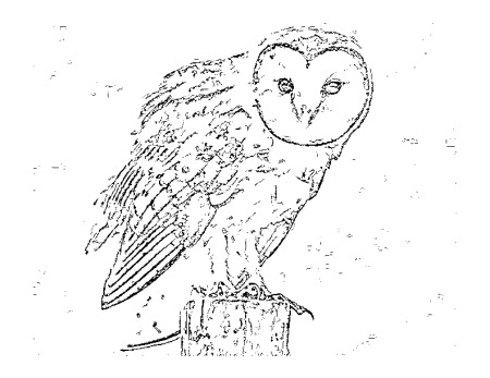 Barn Owl Drawing At GetDrawings