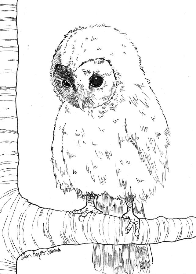 642x900 Owl Baby Drawing By Callan Rogers Grazado