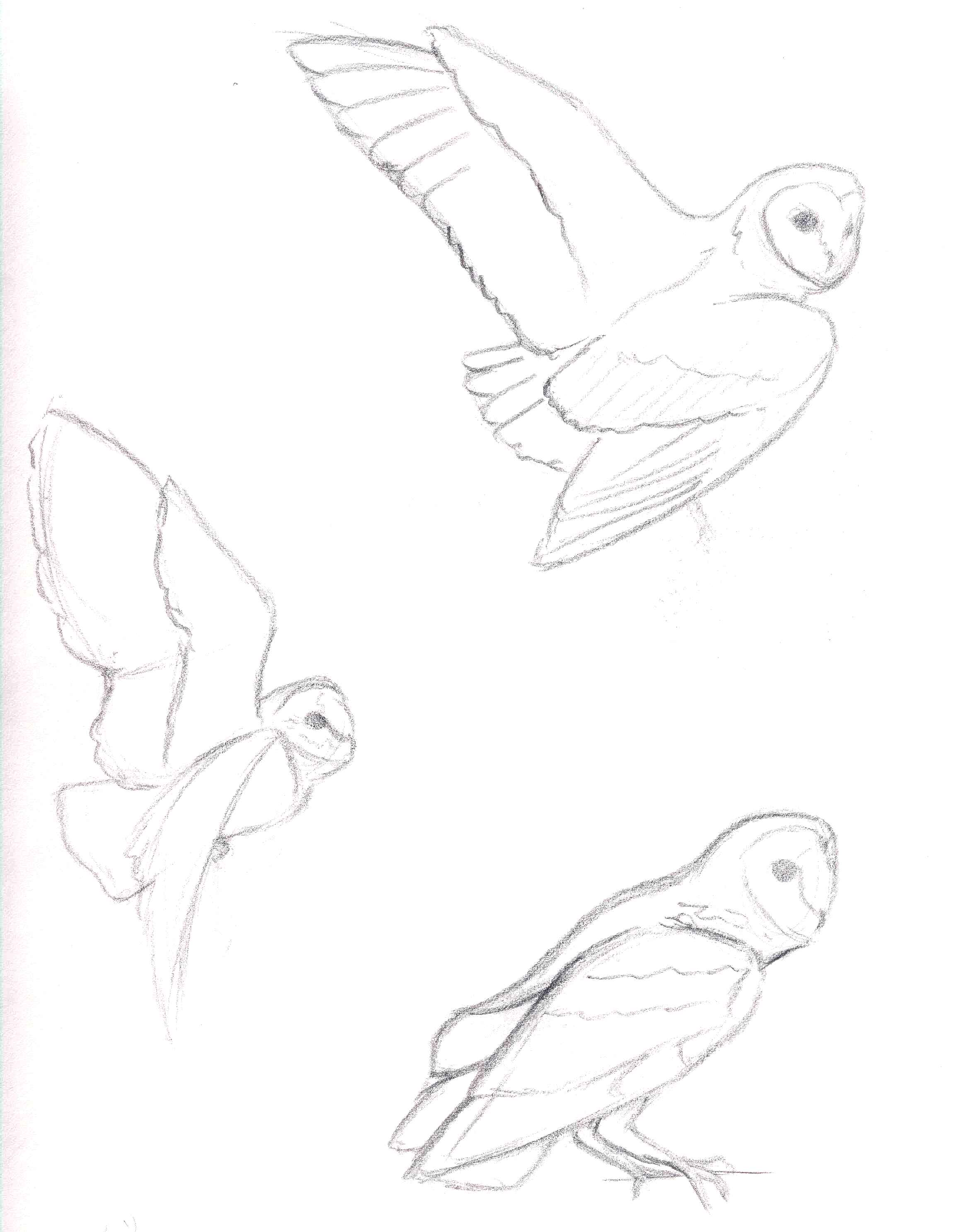2314x2973 Owl Sketches