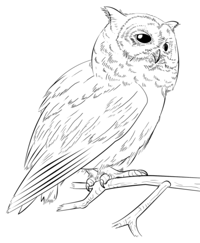 396x480 Southern White Faced Owl Coloring Page Free Printable Coloring Pages
