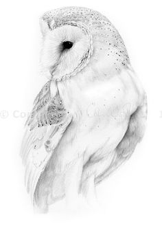 236x339 Flying Barn Owl Pencil Drawing Art Print By Thehauntedhollowtree