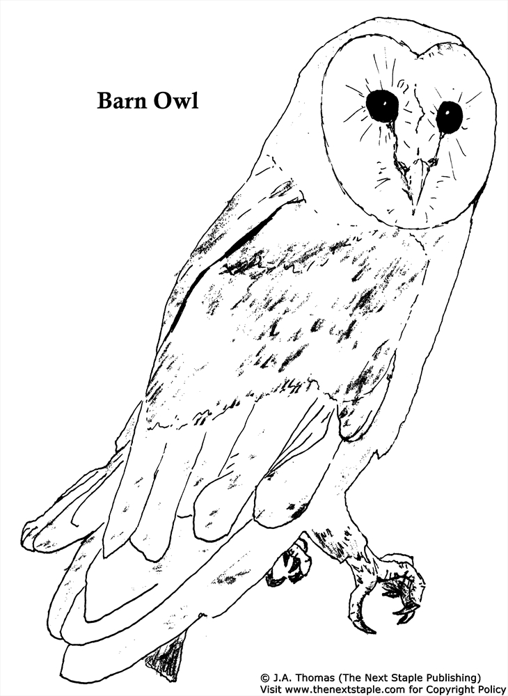 730x1000 Barn Owl Coloring Pages