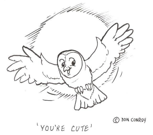 640x566 Barn Owl You'Re Cute Scaled Don Conroy