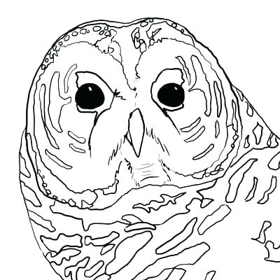 400x400 Snowy Owl Coloring Pages Owl Coloring Pages To Print Barn Owl