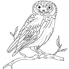 230x230 Top 25 Free Printable Owl Coloring Pages Online