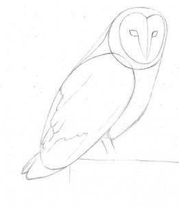 261x302 How To Draw A Barn Owl Step 3 How To Draw Barn