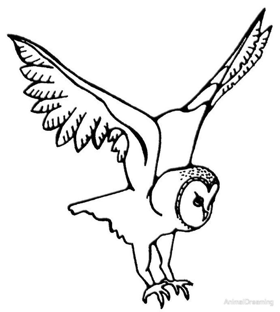 898x1000 Barn Owl In Flight By Animaldreaming Redbubble
