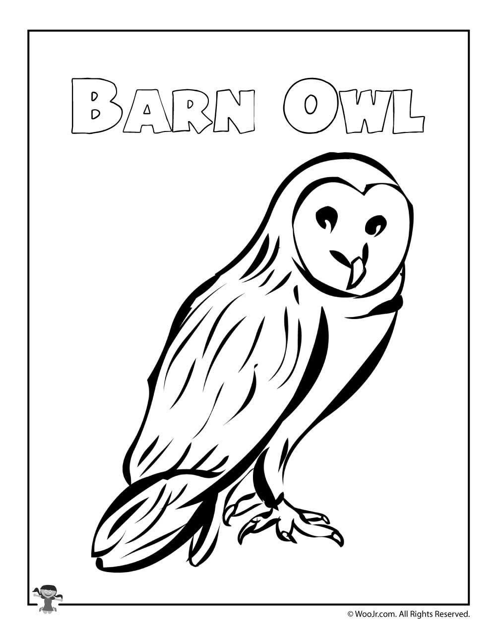 1000x1294 Barn Owl