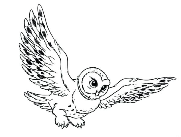 600x456 Ideas Barn Owl Coloring Page And Coloring Pages Owl Owl Coloring