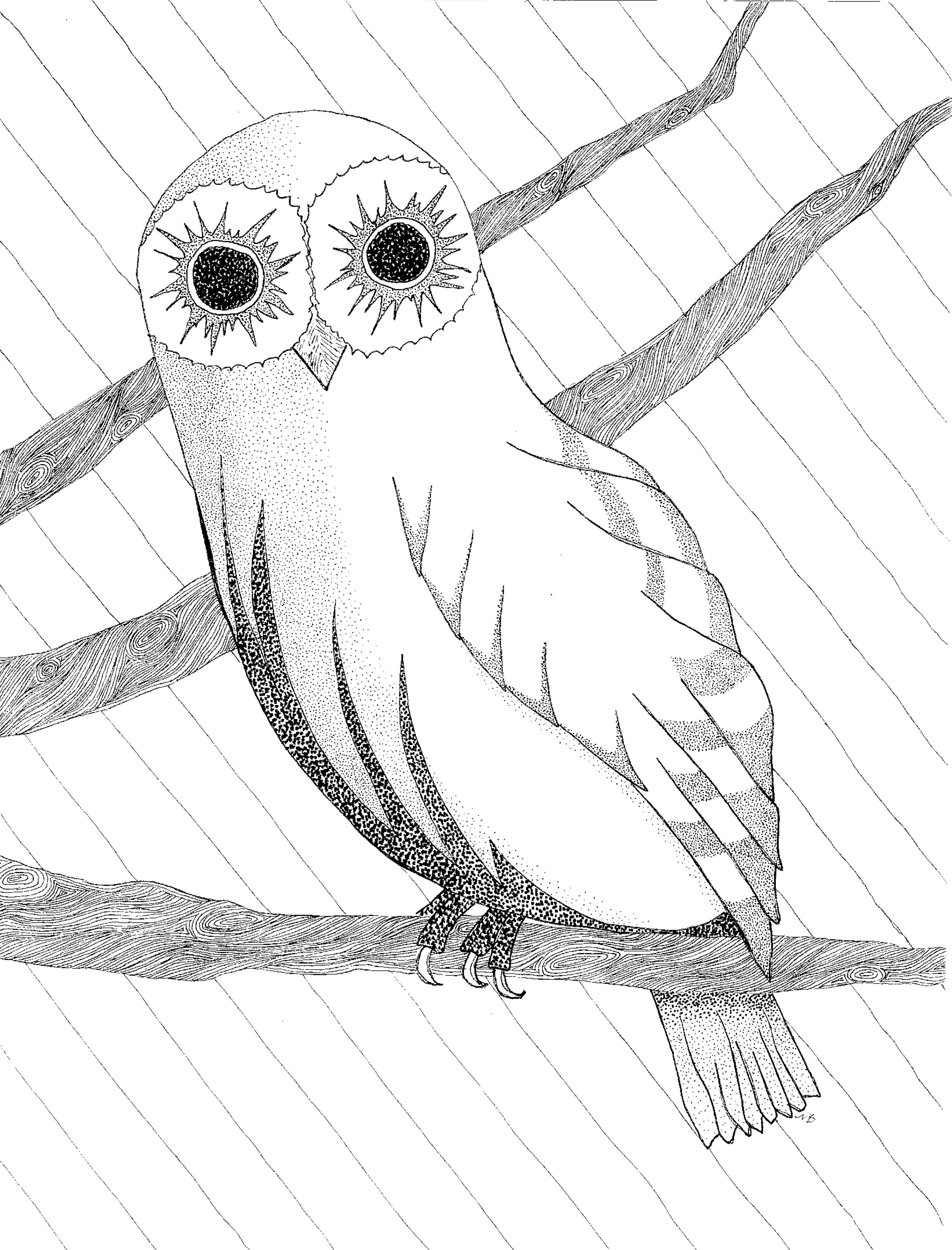 3285x4315 Owl