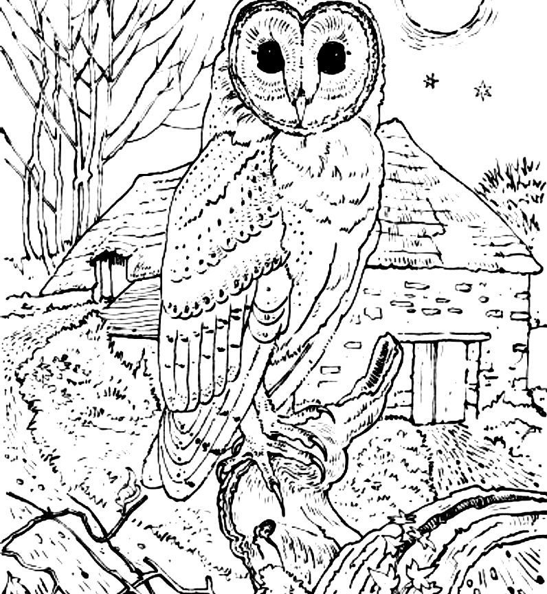 796x864 Realistic Barn Owl Coloring Pages Print Animal Free Animals