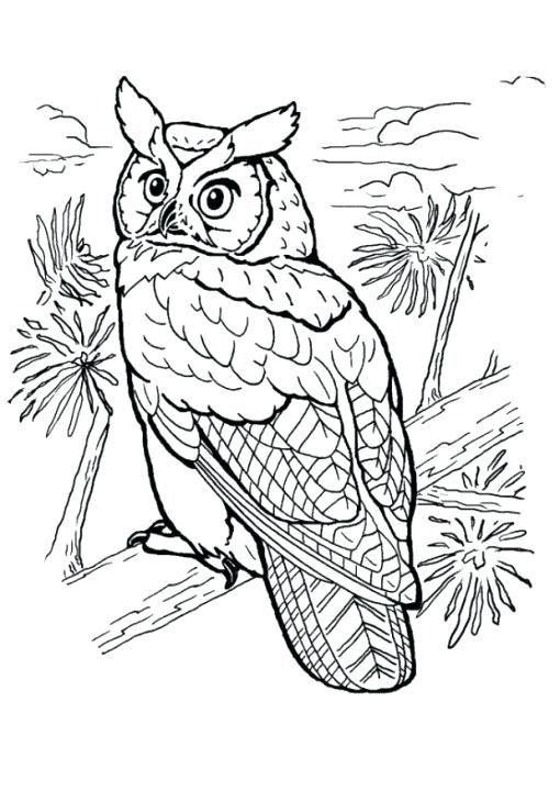 510x720 Barn Owl Coloring Page Barn Owl Colouring Sheets Omnitutor.co