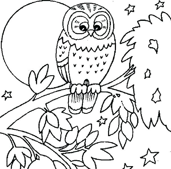 600x591 Barn Owl Coloring Page Images Of Owl Coloring Sheets Snowy Owl