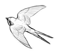 236x218 Barn Swallow Adult Feeding Juvenile Barn Swallow Tat
