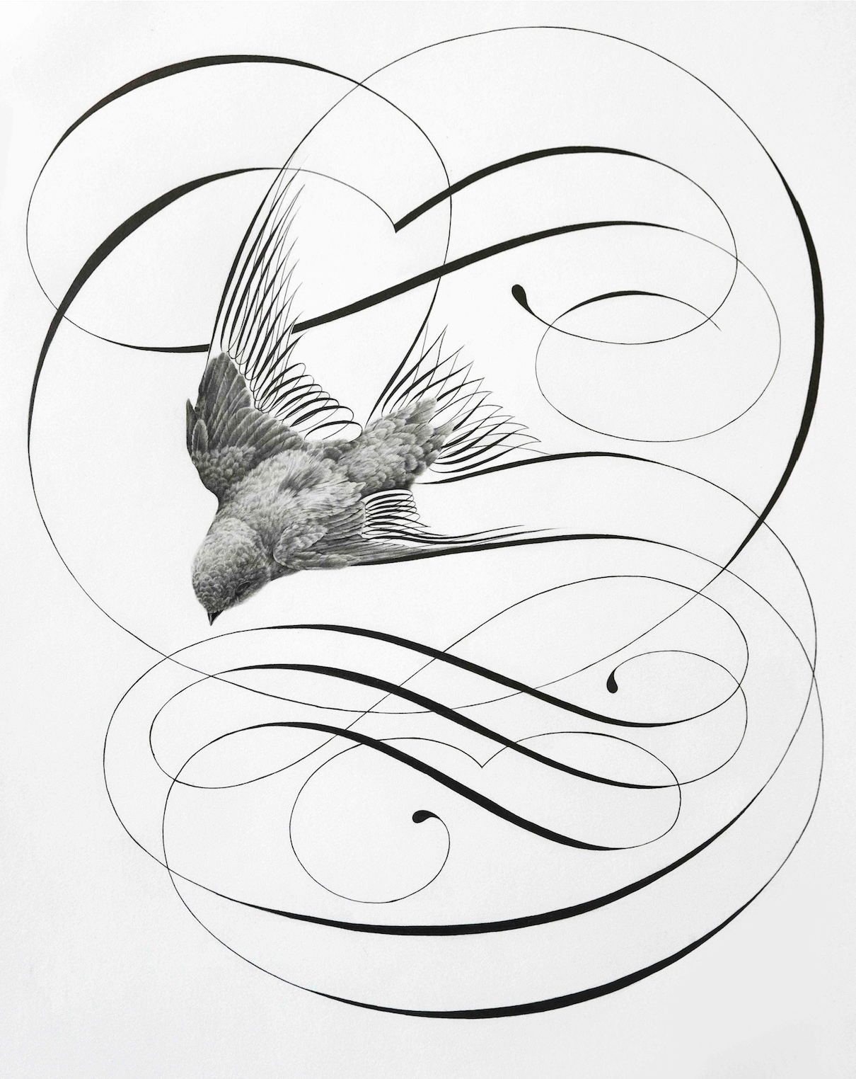 1210x1524 Flight Of Fancy Jake Weidmann Artist And Master Penman