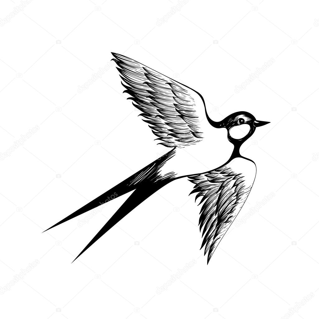 1024x1024 Hand Drawn Flying Swallow Silhouette Stock Vector I Panki