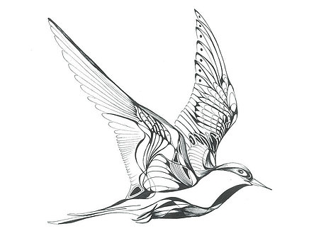 453x350 Arctic Tern For Bird Nerds Arctic Tern, Tattoo