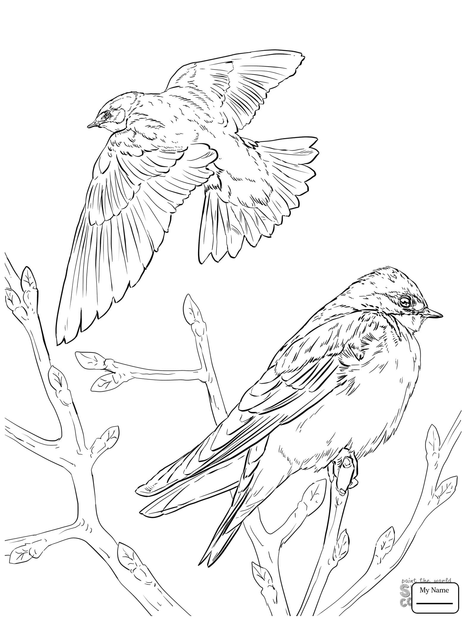 1567x2089 Birds Barn Swallow In Flight Coloring Pages
