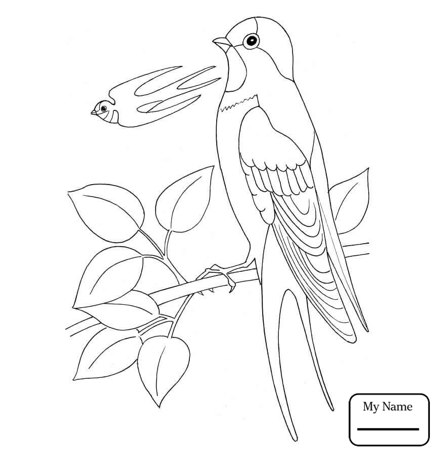 867x902 Birds Barn Swallows Coloring Pages For Kids