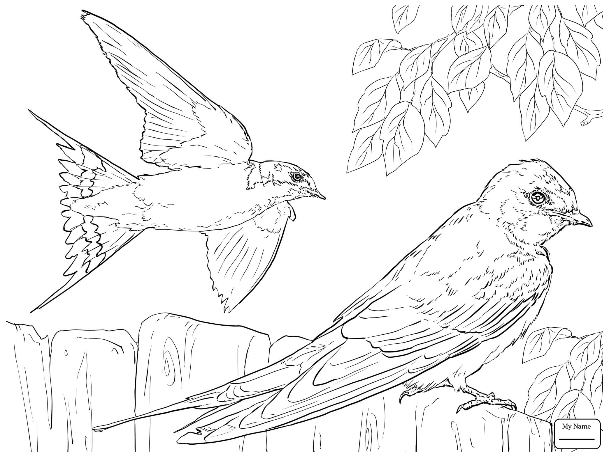 2089x1567 Coloring Pages For Kids Swallows Barn Swallow In Flight Birds