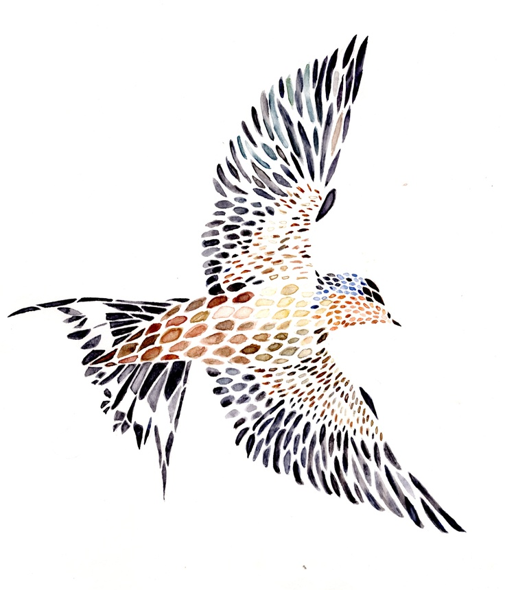 736x861 15 Best Bird Illustration Images On Swallows, Bird