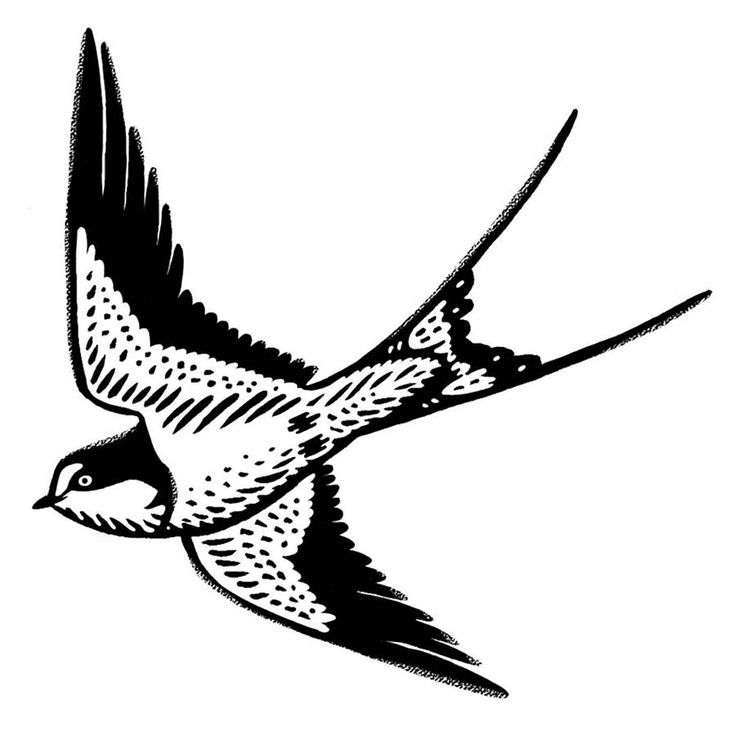 736x736 21 Best For The Home Images On Blue Swallow, Swallows