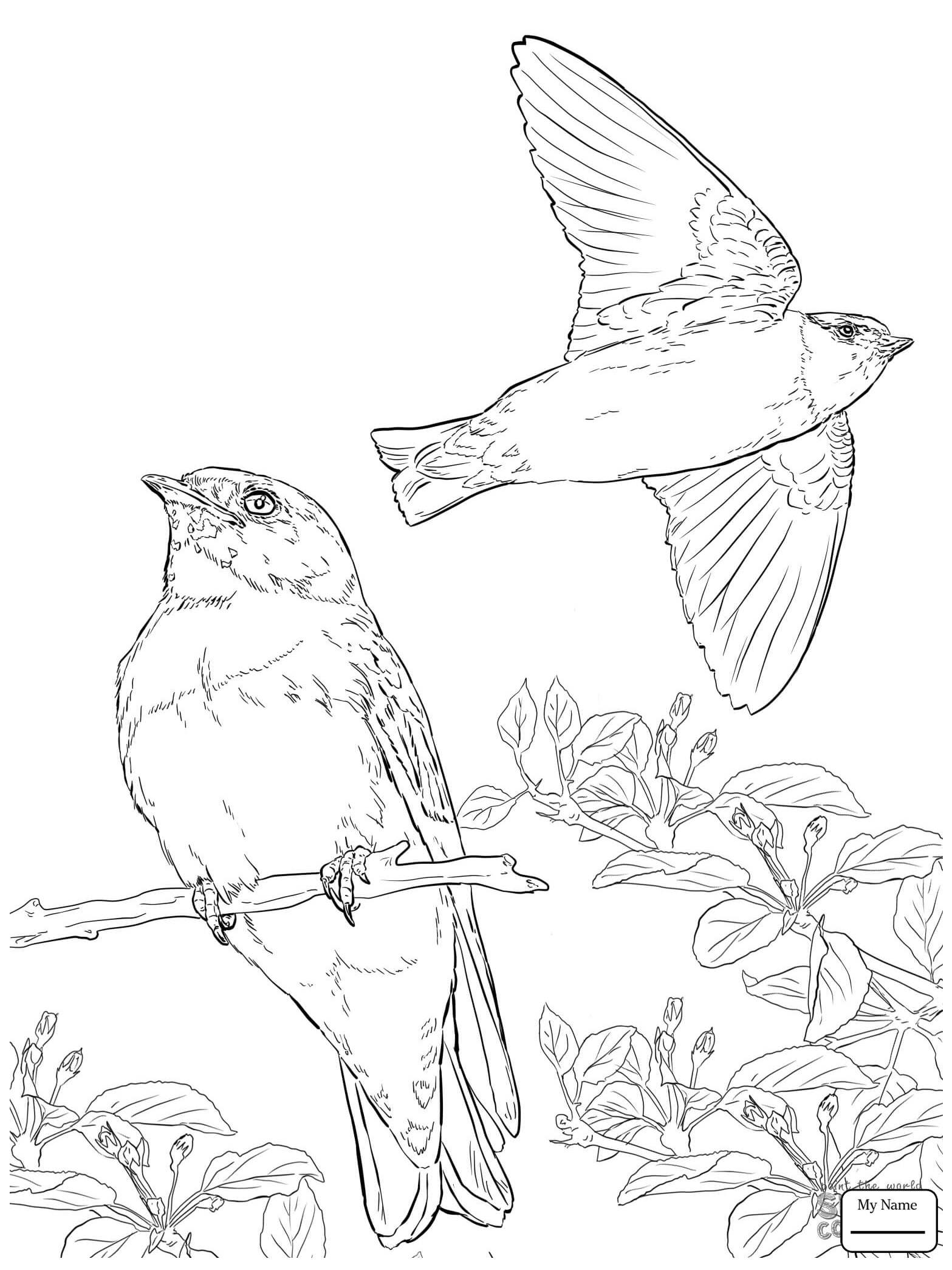 1567x2089 Barn Swallow Swallows Birds Swallows Coloring Pages For Kids