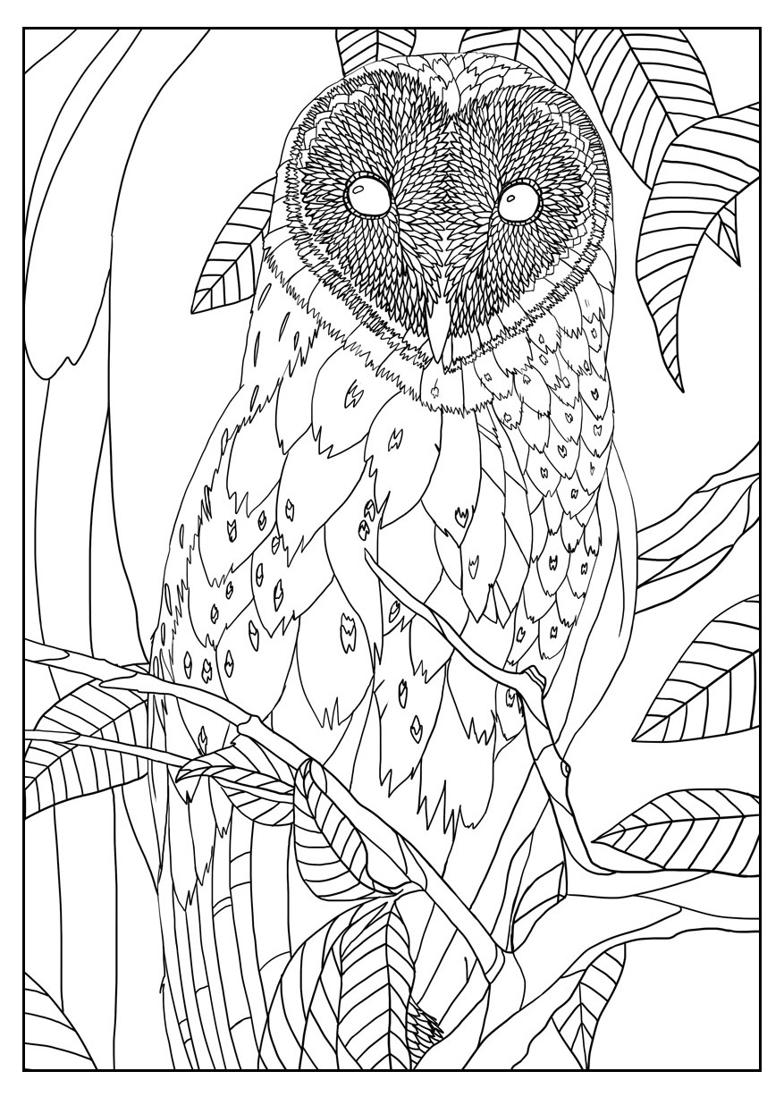 877x1236 Free Coloring Page Coloring Adult Barn Owl By Mizu. Exclusive