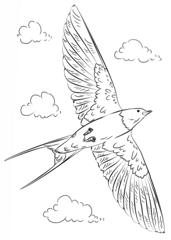 341x480 Barn Swallow In Flight Coloring Page Cookie Decorating Animals
