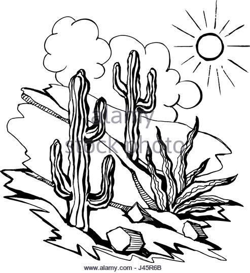 493x540 Western Landscape America Cactus Stock Photos Amp Western Landscape