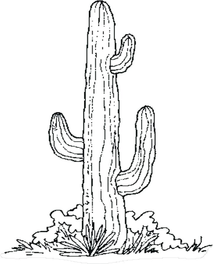 Barrel Cactus Drawing at GetDrawings.com   Free for personal use ...