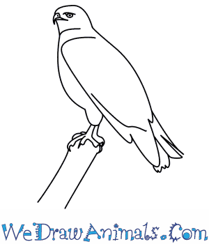 300x350 How To Draw A Hawk