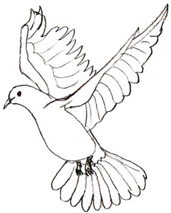 250x310 How To Draw A Dove