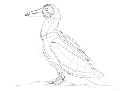 440x318 Lesson 5 Drawing Animals