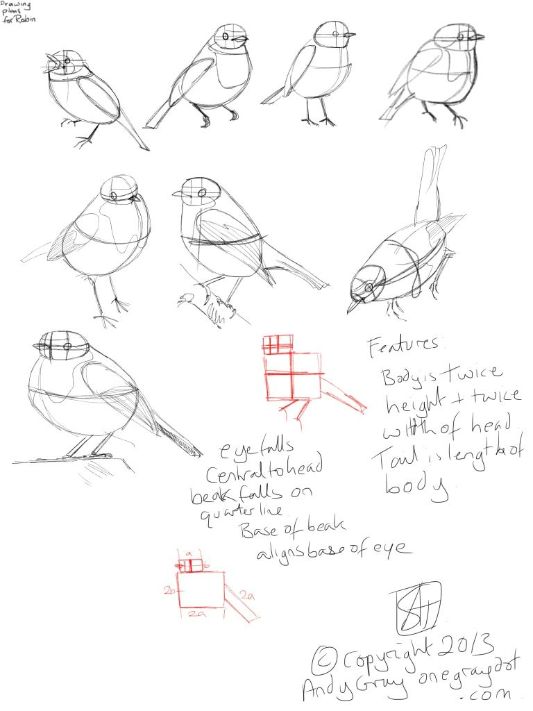 768x1024 How To Draw A Robin