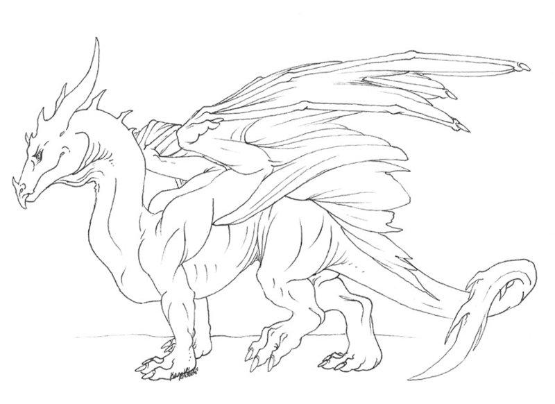 800x582 My Basic Dragon By Varaann