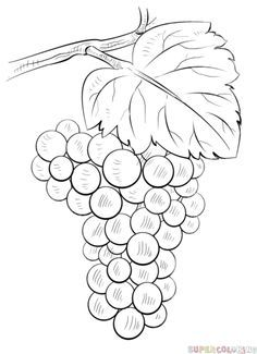 236x325 How To Draw Grapes Step By Step. Drawing Tutorials For Kids