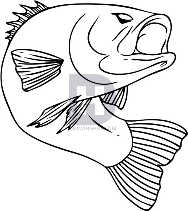643x720 I Thought It Was Time To Do Another Drawing On A Freshwater Fish