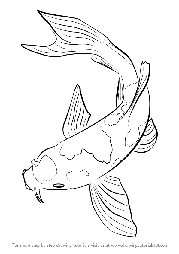 596x842 Learn How To Draw A Koi Fish (Fishes) Step By Step Drawing Tutorials