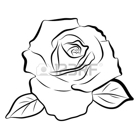 Basic Rose Drawing