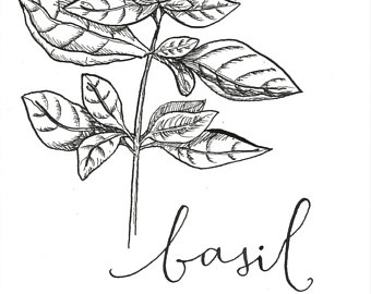 340x270 Basil Illustration Etsy