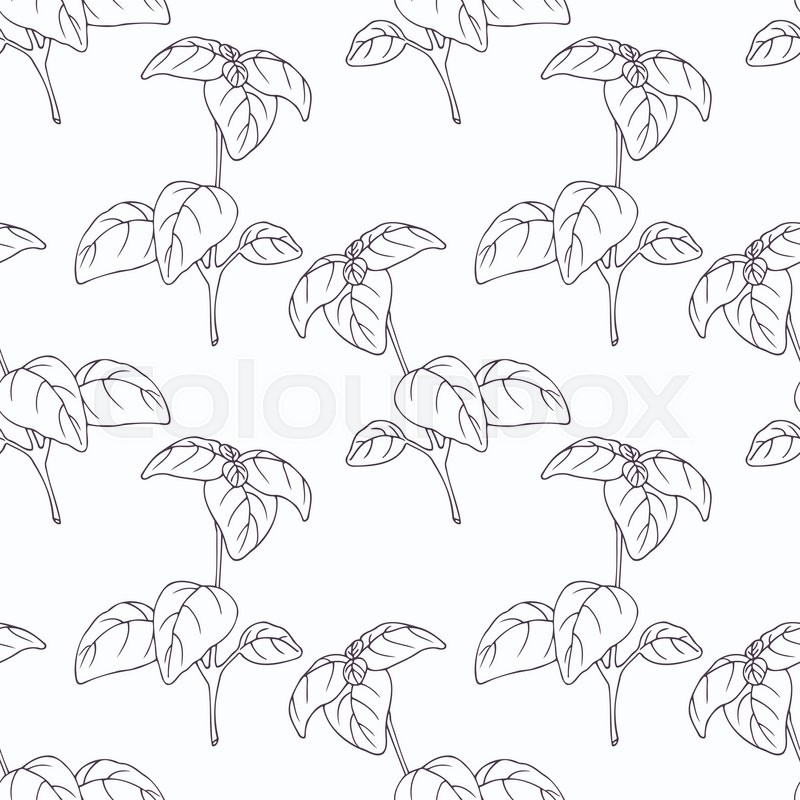 800x800 Hand Drawn Basil Branch Outline Seamless Pattern. Doodle Drawing