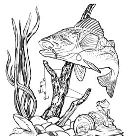 254x273 Bass Action Art Sketch, Underwater Fishing Scene With Tangled Lure