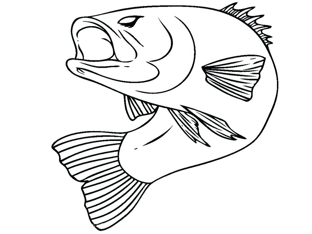 1024x768 Coloring Bass Coloring Pages H Realistic Cap Printable On Free