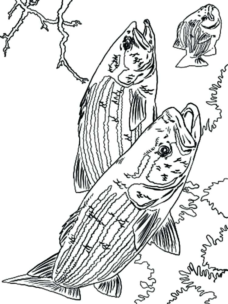 750x1000 Bass Coloring Pages Fish Colouring Pages For Adults Printable