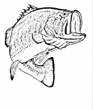 395x465 Bass Coloring Pages Coloring Pages Ideas