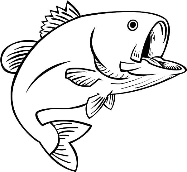 600x552 Fishing Fun Bass Fish Coloring Pages Best Place To Color