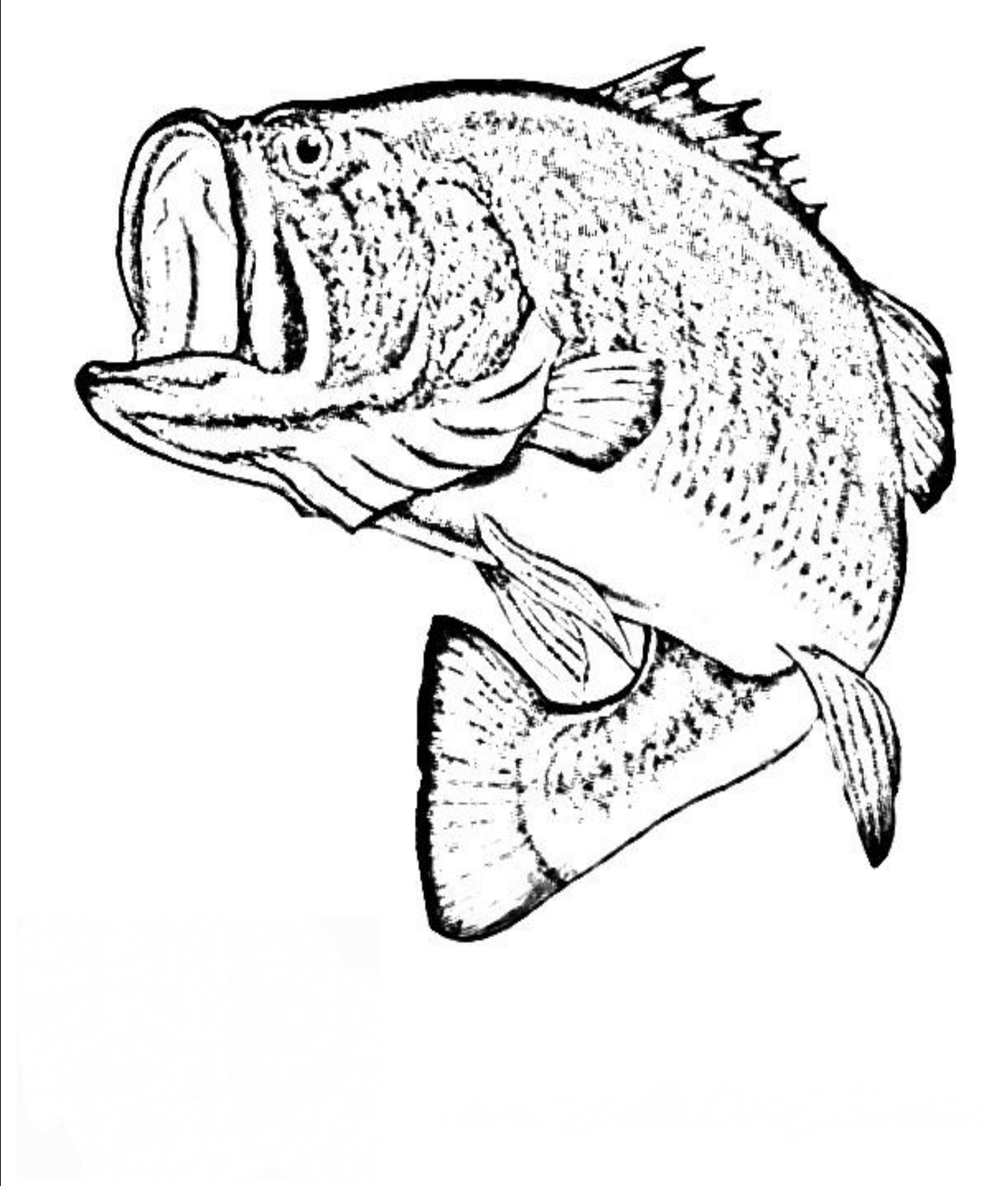 2550x3000 Top 74 Bass Coloring Pages